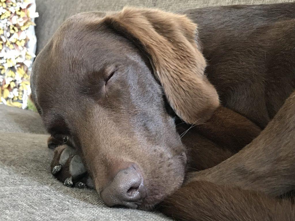 Slapende honden wakker maken